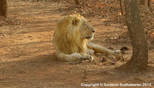 Lion3s600