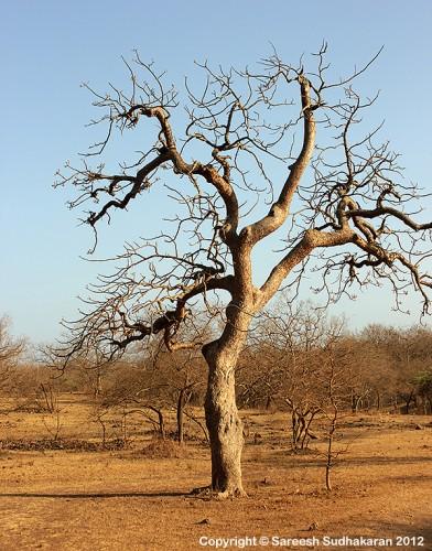 Tree600