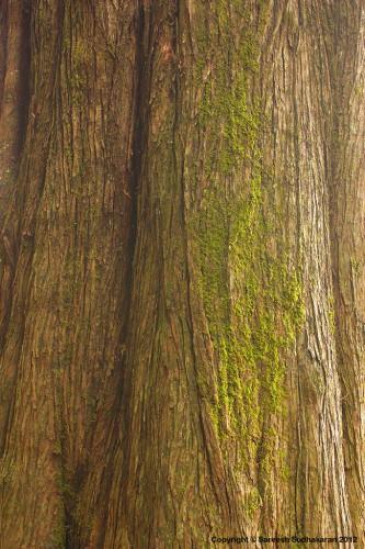 treetexture